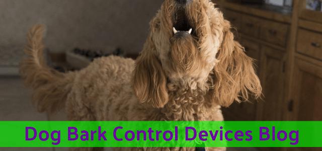 dog_barking_control_devices_barking_blog