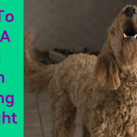 How To Stop A Dog From Barking At Night – Get Your Sleep