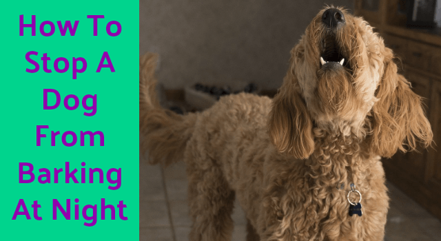 dog_barking_control_devices_how_to_stop_a_dog_from_barking_at_night